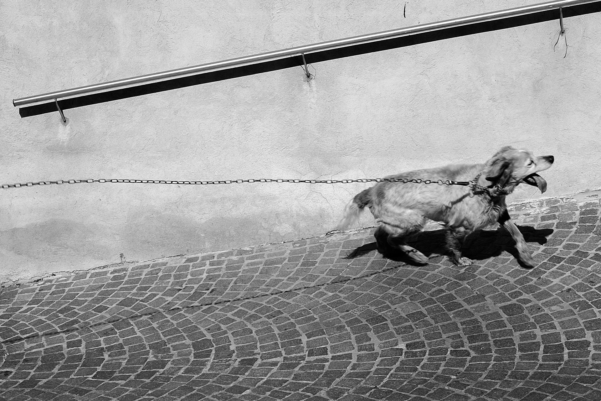 barcellona-lucio-de-santis-fotografia-photography-street-personal-photos-beauty-blackandwhite-dog-cani