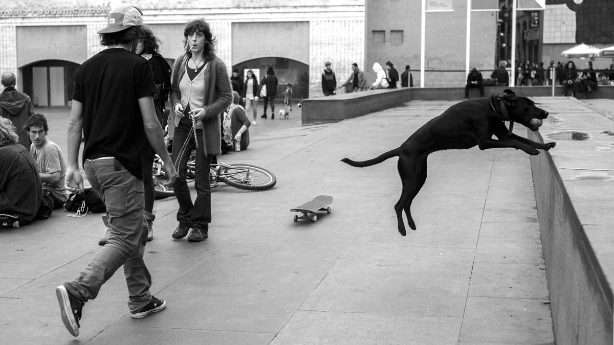 barcellona-lucio-de-santis-fotografia-photography-street-personal-photos-beauty-blackandwhite-dogs-animals